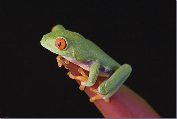 01Jun2010_Froggies_0737